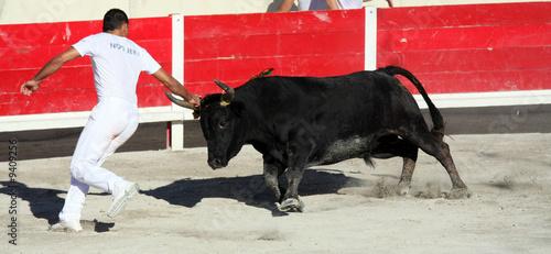 Canvas Stierenvechten Course camarguaise
