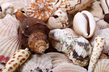 Different kinds of shellfish shells close up