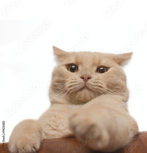 Annoyed cat isolated on white