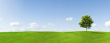 Panorama of a maple tree on a meadow against a blue sky © Jan Will