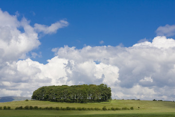 Copse, Forest of Bowland, blue sky with white storm clouds
