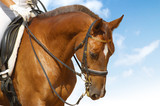 dressage - equestrian sport poster