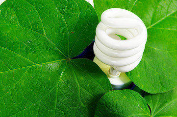 compact fluorescent light bulb and green leaves (green power)