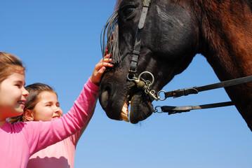 jumelles et cheval