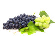Bunch of grape isolated on  a white background.