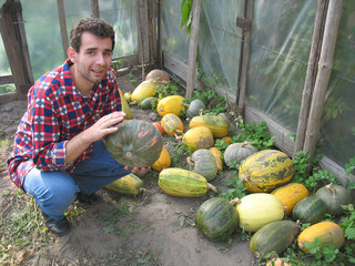 The young farmer is showing his pumpkins in the greenhouse