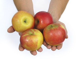 Two hands holding four apples