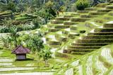 Bali  0161