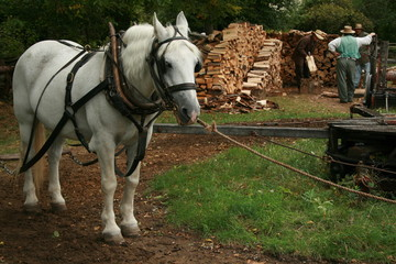 Horse in a traditional village