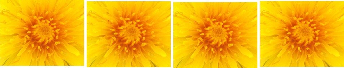 Dandilion flower rectangles