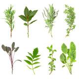 Fototapety Herb Leaf Sprigs