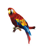 Cute red parrot illustration isolated on white