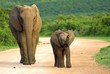 A mother and baby Elephant approach my vehicle