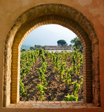 Fototapeta Arkada okienna z widokiem na pole winogrona