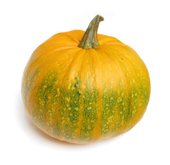Pumpkin marrow vegetable huge