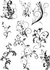 Floral element -  vector collection
