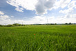 green field, grass and blu sky