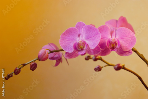 branch of violet orchids on the pastel background..
