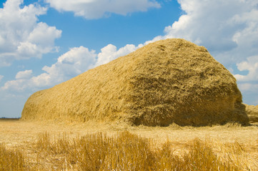 large stack of straw on the field