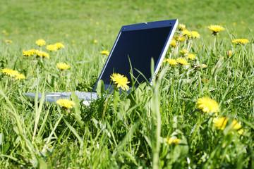 laptop in a spring field