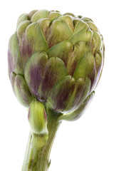 Isolated macro image of a globe artichoke.
