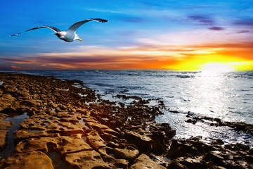 Coastal view with flying seagull