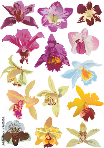 fourteen orchids collection