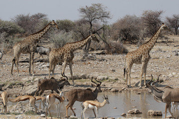 Wildlife am Wasserloch im Etosha Nationalpark, Namibia