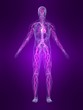 anatomie mit markiertem vasculären system