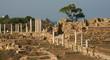 Site de Salamis - Chypre