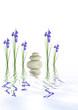 Spa Stones and Iris Flowers