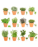 Fototapety Large Herb Selection in Pots