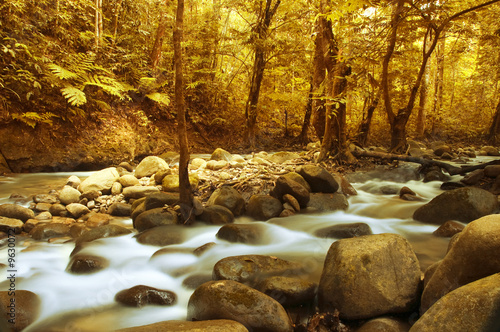 Autumn forest with mountain river