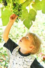 Little boy reach for grape