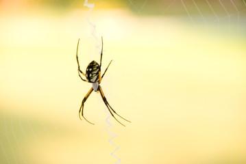 A writing or scribbler orb weaver spider.