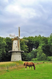 Windmill and a horse in The Netherlands