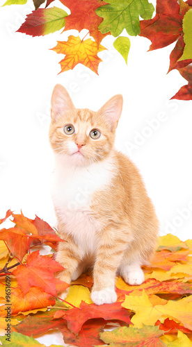 poster of red fluffy cat with autumn leaves