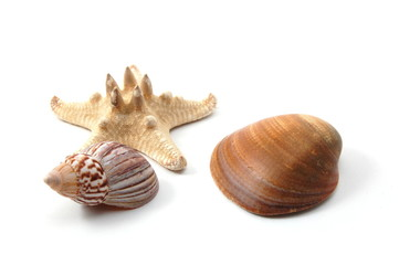 Some shells from the ocean isolated on white background