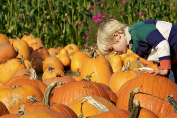 Cute young boy looking at a pumpkin at the pumpkin patch