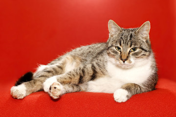 very nice kitty on red background and idler