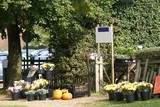 flowers & pumpkins at the entrance of a nursery for sale poster