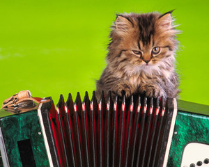 small kitten sits near  musical instrument