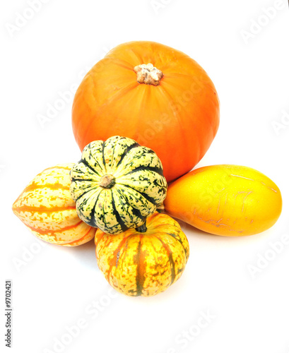 colourful squashes
