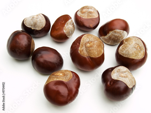 wild chestnut on