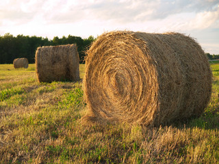Rolled hay bails at sunset in a Manitoba feild 2