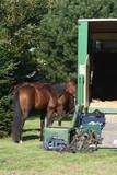 cheval, chevaux, course, casaque, toque, bombe, selle poster