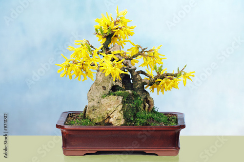 forsithia bonsai