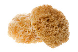 Isolated image of edible white fungus. poster