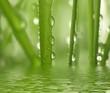 Fresh Green grass as a background