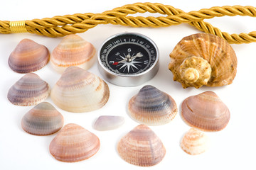 Compass and shellfish isolated on white background